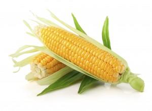 Kukoricában, helmintospóriumos betegségre