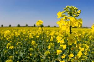 Változás a növényvédő szerekben