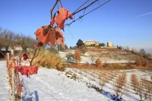 A jó karban lévő szőlőnek meg sem kottyan a szélsőséges januári hőingadozás