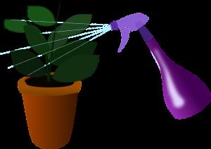 szobanövények, pajzstetvek
