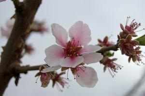 A virágzásig és utána is lehet izgulni