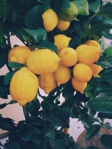 Harc a citrusok életéért