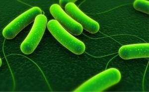 Vegyszerek helyett gomba és baktériumbarátokkal