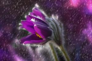 Az agyagásvány és a szapora  eső