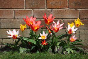 Éves virágsor