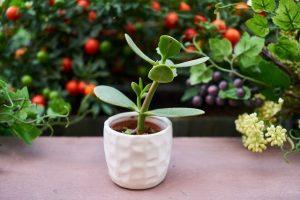 Nyári növénybújócska