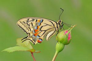 Búcsú a pillangóktól