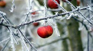 Toporgás a gyümölcsös kertben